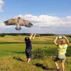 1.1m - Flat eagle kite - kites - kids - toys