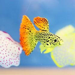 Goldfish - luminous - fish tank / aquarium decoration